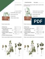 Actividades Las Plantas