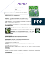 Analisis Macroscopico Alfalfa