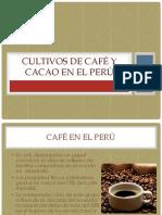 Cultivos Peruanos- Café y Cacao