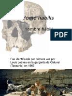 Homo+habilis+y+Homo+erectus