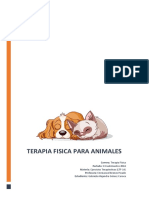 Terapia Física Para Animales
