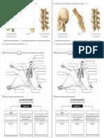 taller ARTICULACIONES.pdf