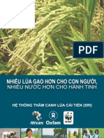 Nhiều lúa gạo hơn cho con người, nhiều nước hơn cho hành tinh