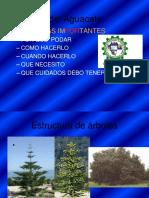 6-Podas y Manejo de Plantaciones