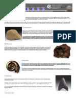 Procesos Químicos de Fosilización