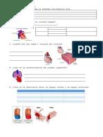 FICHA Sistema Circulatorio - Para Llenar