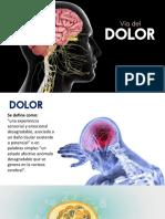 Vía del dolor presentación Ale´s.pdf