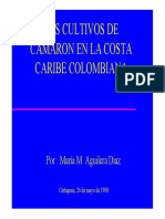 Caribe Camaron