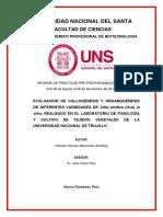 Informe de Practicas_uva.pdf