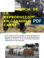 Import an CIA de La Reproduccion en Ganado de Carne1