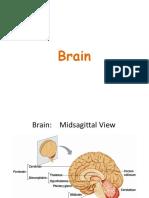 Brain - Unit I