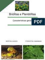 Briófita e Pteridofitas