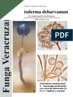 176 Clastoderma debaryanum