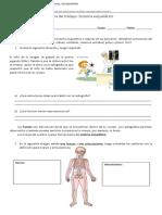 Ficha de Trabajo Sistema Esqueletico