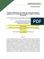 Paso 6, POA Estudio Ecofisiologico Del Cultivo de La Guayaba, Grupo 201711_2