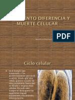 Crecimiento Diferencia y Muerte Celular