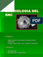 Embriologia Del Snc
