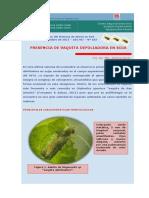 Inta Boletin Entomologico No 182. Informe Especial Megascelis