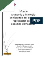Anatomía reproductiva comparada de especies domésticas