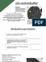Distribución Centrolobulillar Expo.M
