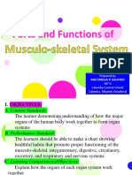function of muscular system