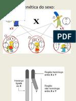 Genética Do Sexo -3º Ano-ppt (3) (1)