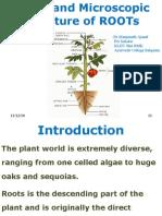 Roots Basic Botany