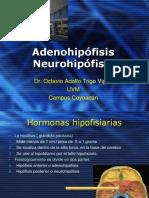 Adenohipofisis-1