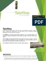4. Talofitas