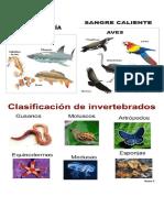 Animales Vertebrados, Animales Invertebrados