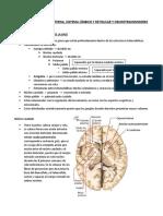Clase 10 - Morfología interna, sistema límbico y reticular y neurotransmisores.docx