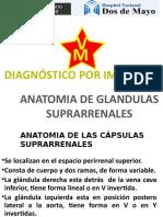 2. Anatomia y Patologia Suprarrenal