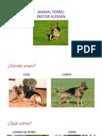 presentacion de un perro