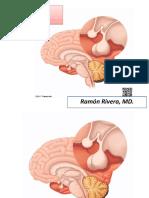 Adenohipofisis y Neurohipofisis