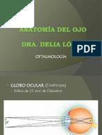 1.Anatomía Del Ojo
