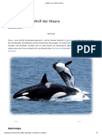 Krafttier Orca - Wolf Der Meere