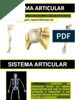 Sistema articular