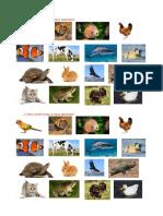 FICHAS DE TRABAJO SOBRE ANIMALES