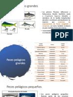 Tarea 2. Especies Acuaticas de Interes Comercial en El Ecuador