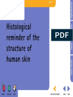 Histological reminder of structure of human skin