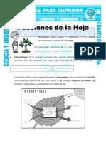Ficha Funcion de La Hoja Para Cuarto de Primaria (1)