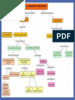 Mapa Conceptual Funciones de Relación