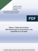 Raíces y Tubérculos Andinos.pptx Grupo n 4