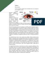 Correlaciones Clinicas Del Ojo