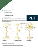 Nervous System 9 10