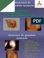 Anatomía de Glándula Mamaria