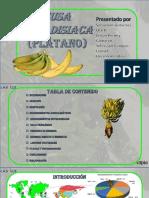 Presentación1 [Autoguardado] (1).pptx
