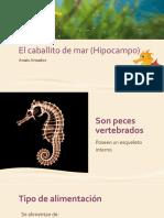 El Caballito de Mar (Hipocampo)