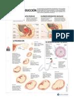 Articles-26578 Recurso PDF