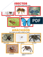 Album de Insectos